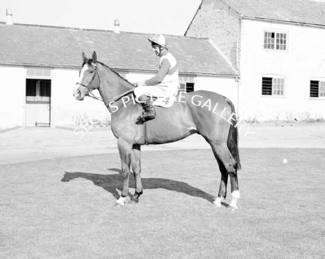 Racehorse The Dikler with Jockey Ron Barry
